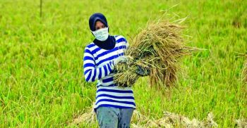 PM announces Tk 5000cr stimulus package for agriculture sector